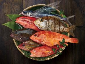 川東繭右さん /お魚マイスター お魚かたりべ