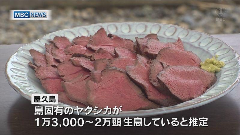 屋久島「ヤクシカ」の肉を住民に振舞う