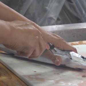 屋久島 漁師らが魚の血抜きを学ぶ講習会