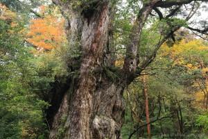 YakushimaFilm「屋久島の秋さがし」